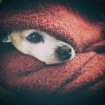 Hund hat Angst vor Knallgeräuschen: Tipps für Silvester