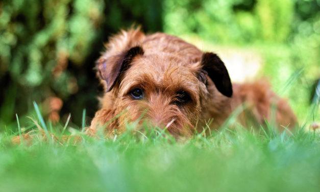 Garten hundefreundlich gestalten: So wird sich dein Hund wohl fühlen