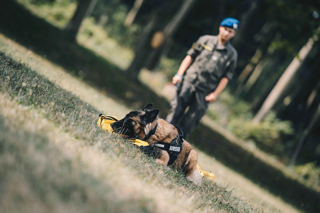 Bundesheer: Testphase für Covid-19 Spürhund