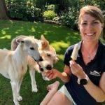 Warum Hunde kein Speiseeis schlecken dürfen