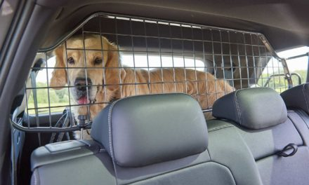 Sicherer Transport von Hunden im Auto: Test unterschiedlicher Fixiersysteme