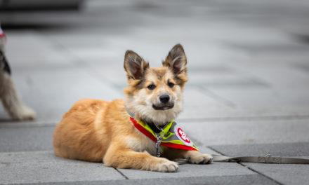 Welttag des Hundes am 10. Oktober