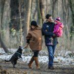 Tipps für abwechslungsreiche Winterspaziergänge mit Hund in Wien