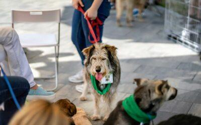 Adoption eines Hundes in Zeiten von Corona